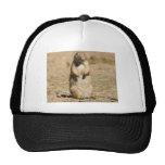 Prairie Dog Hat
