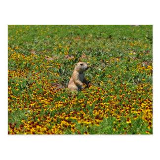 Prairie Dog in Flowers Postcard