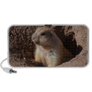 Prairie Dog in Hole Speakers