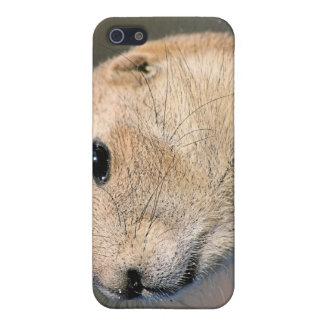 Prairie Dog iPhone Case iPhone 5 Cases