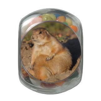 prairie dog is full glass candy jars