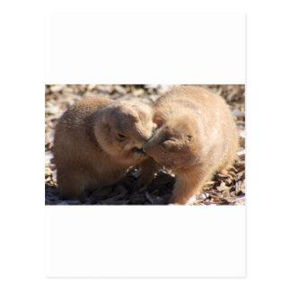 Prairie Dog Love Postcard