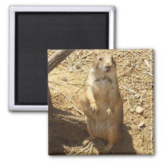 Prairie Dog Magnet