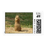 Prairie Dog Mom Stands Up To Take A Look At The Ki Postage Stamp