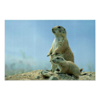 Prairie Dog Mother And Baby Poster