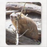 Prairie Dog Nibbling Mouse Pad