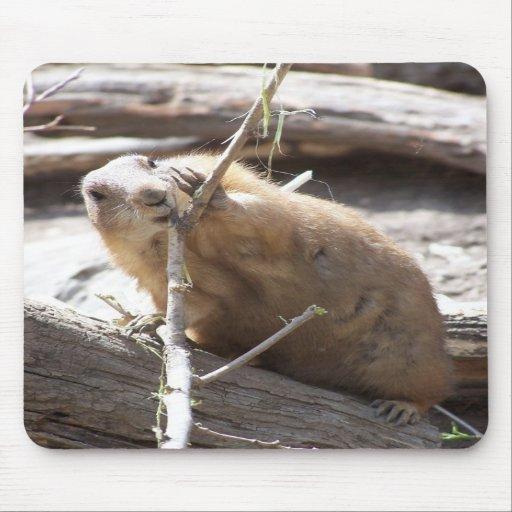 Prairie Dog Nibbling Mouse Mat