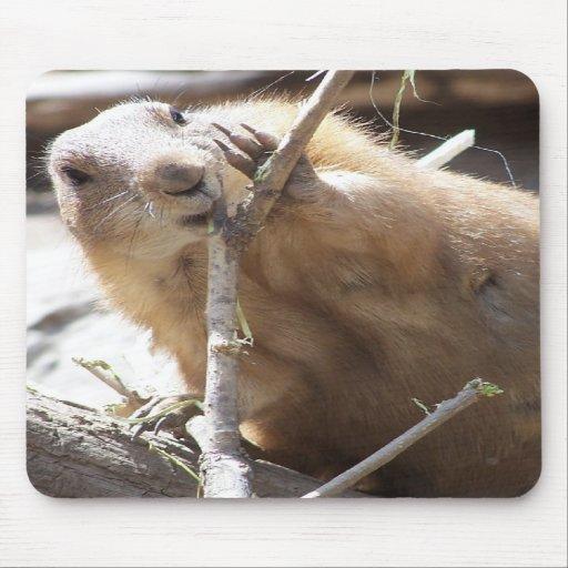 Prairie Dog Nibbling Mouse Mats