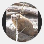 Prairie Dog Nibbling Round Sticker