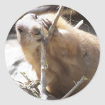 Prairie Dog Nibbling Sticker