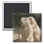 Prairie Dog Photo Square Magnet Magnets