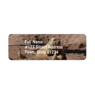 Prairie Dog Playing Dead Return Address Label