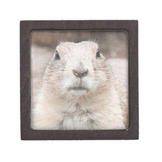 Prairie dog portrait premium gift boxes