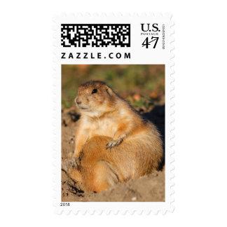 prairie dog postage