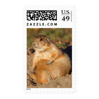 prairie dog postage stamps