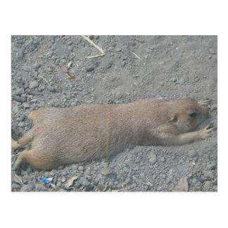 Prairie Dog Postcard