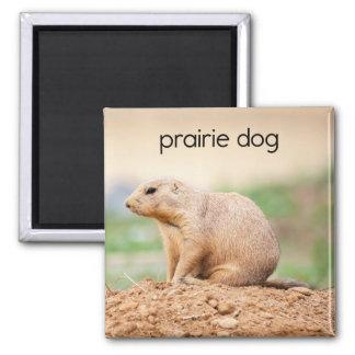 Prairie Dog Refrigerator Magnet