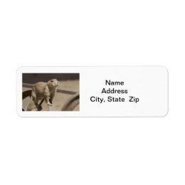 Prairie Dog Return Address Label