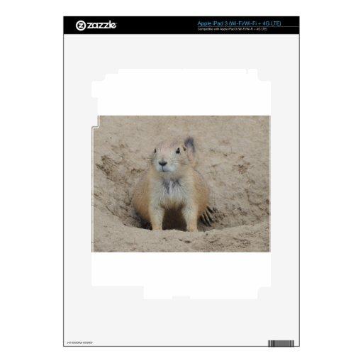 Prairie Dog iPad 3 Decals