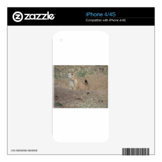 Prairie Dog Skins For The iPhone 4