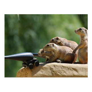Prairie Dog Soldiers Postcard