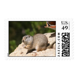 Prairie Dog Stamps