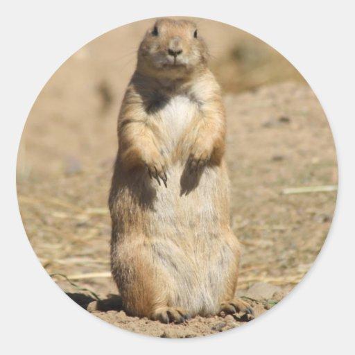 Prairie Dog Sticker