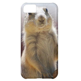 Prairie Dog with Buck Teeth Case For iPhone 5C