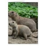 Prairie Dogs 04 Greeting Card