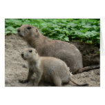 Prairie Dogs 04 Greeting Cards