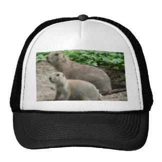 Prairie Dogs 04 Hat