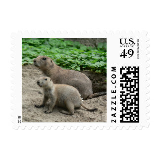 Prairie Dogs 04 Stamps