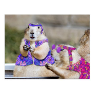 Prairie Dogs are GROOVY! Postcard