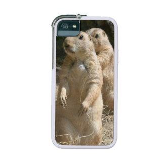 Prairie Dogs iPhone 5 Case
