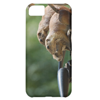 Prairie Dogs iPhone 5C Cover