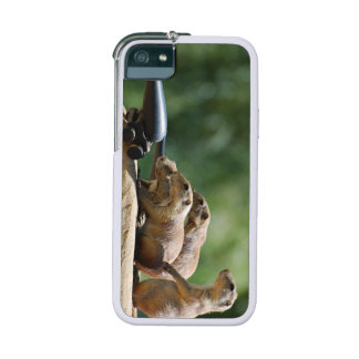 Prairie Dogs Case For iPhone 5