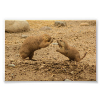Prairie Dogs Give Me Some Skin Poster