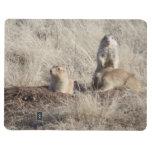 Prairie Dogs photo Journals
