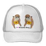 prairie dog's stuffed toy trucker hat