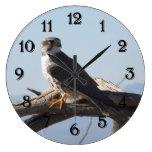 Prairie Falcon Wall Clocks