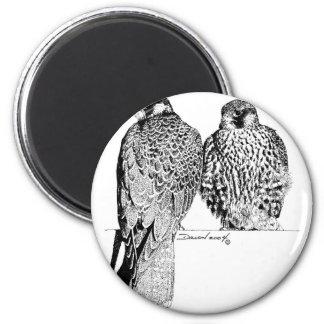 Prairie Falcons Magnet