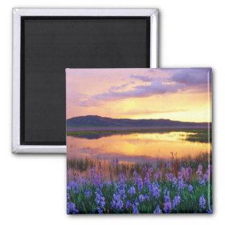 Prairie Flowers Magnet