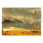 Prairie Grass Cards