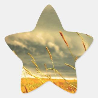 Prairie Grass Star Sticker