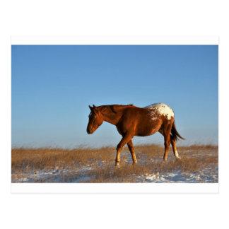 Prairie Horse Postcard