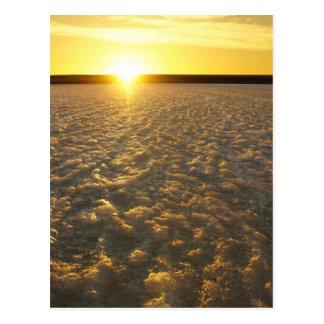 Prairie Ice Fields Postcard