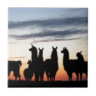 Prairie Llama silhouette Tile