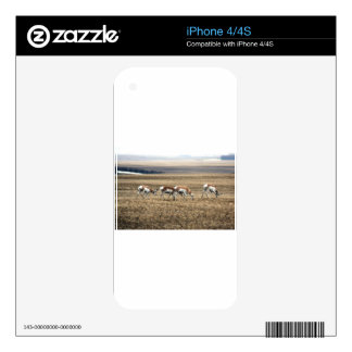 Prairie Pronghorn Antelope Skins For The iPhone 4S