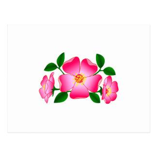 Prairie Rose Postcard