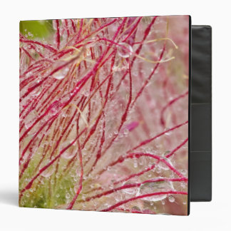 Prairie Smoke in the rain at Theodore Vinyl Binders